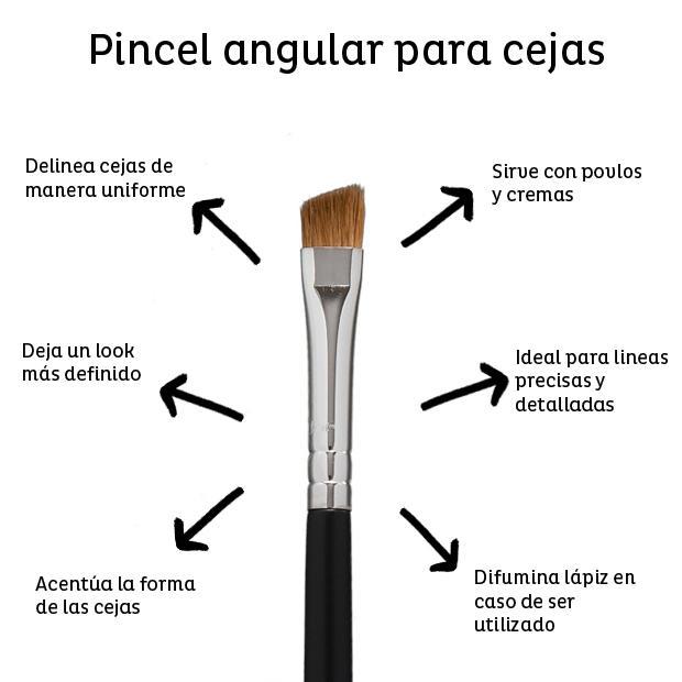angular para cejas - Guía de Brochas y Pinceles y como usarlos